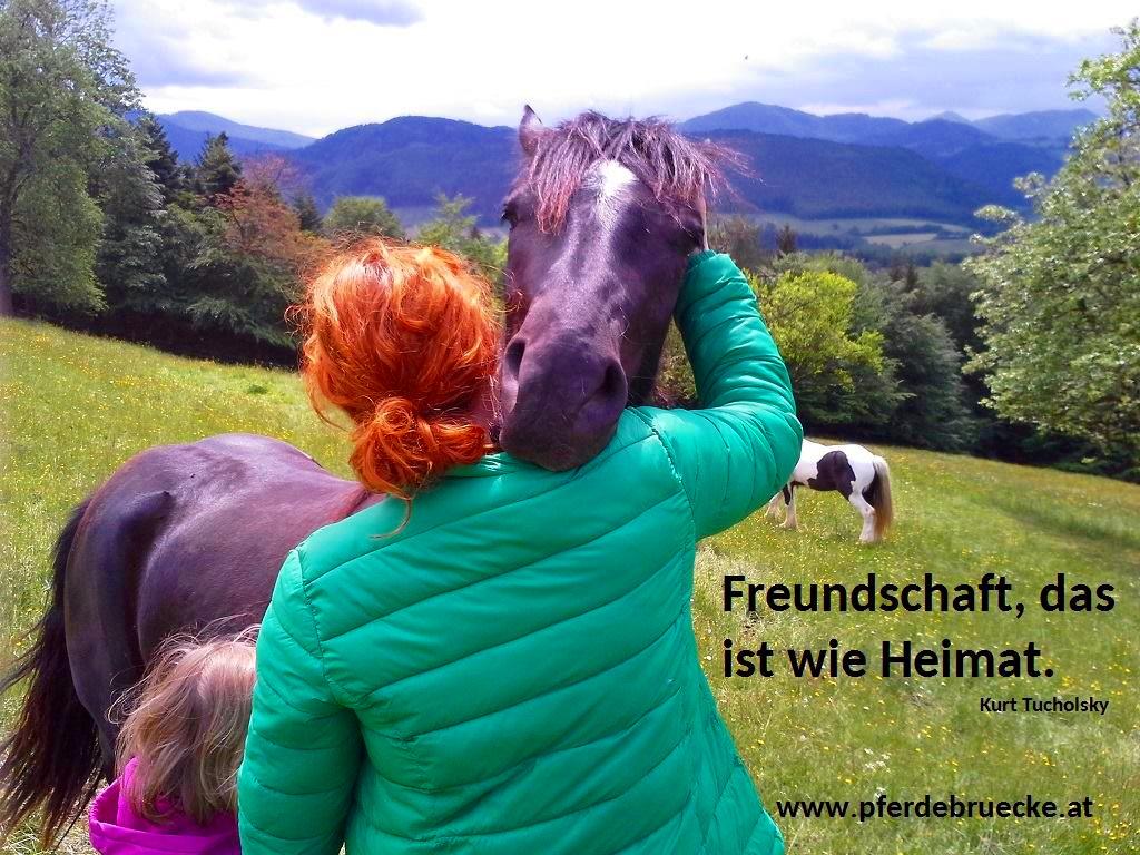 Coaching - Pferden- Mareike Ahrends