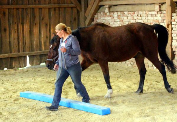 Führungskräfte Pferd Coaching