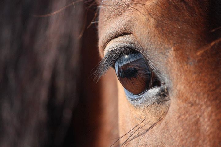 Frauenpower Seminar - Coaching mit Pferden für Einzelpersonen - Pferdebrücke