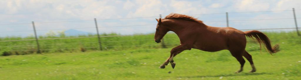 Coachng mit Pferden