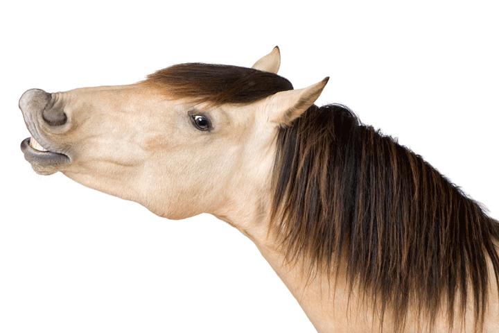 Kommunikation Coaching Pferd