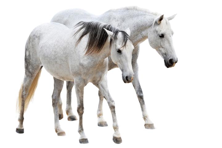 Leadership Coaching Pferd