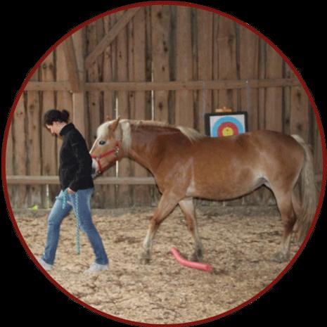 Coaching Führungskräfte - Pferd