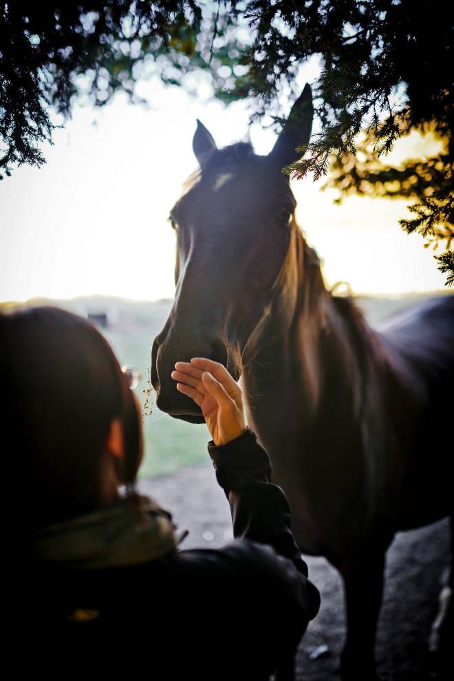 Dem Pferd nähern - Ablauf Coaching mit Pferden