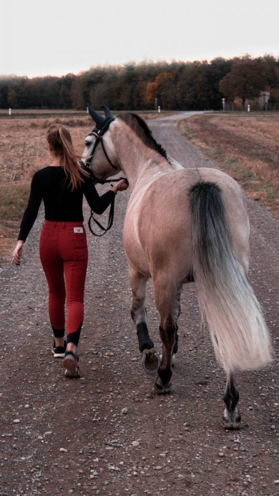 Führen und Begleiten - Pferdebruecke