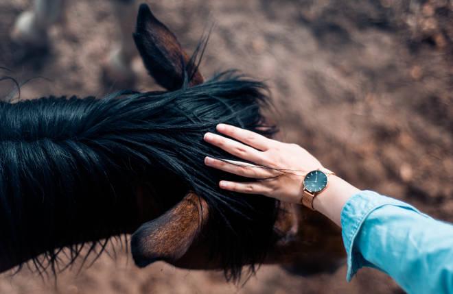 Ablauf Coaching mit Pferden - Berührung